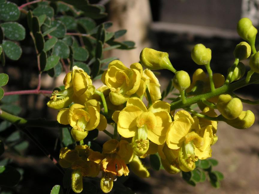 natural green rose
