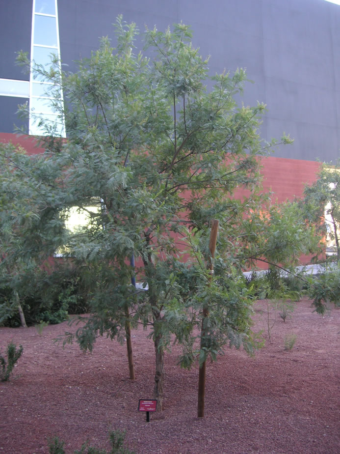 find trees  u0026 learn